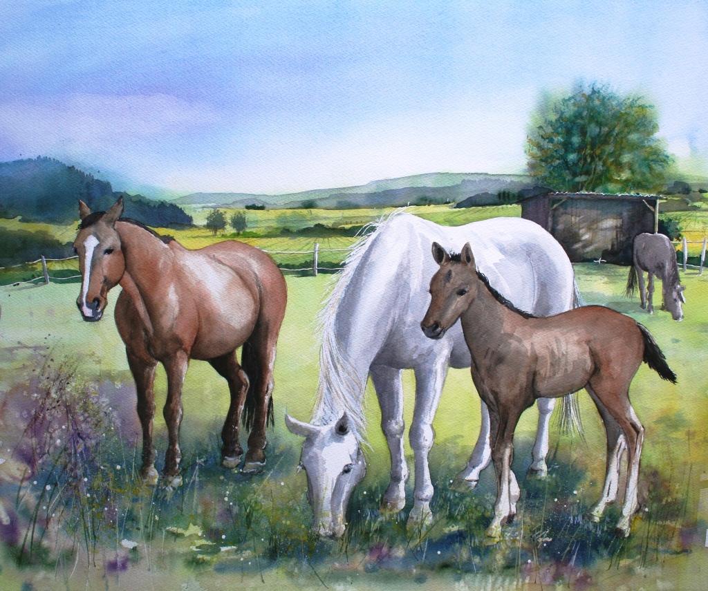 Pferdekoppel 40x50cm